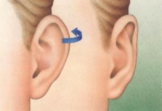 oreilles1